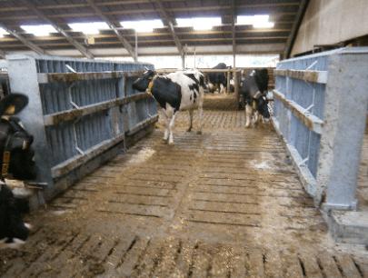 FJ-Agro - Foderbordslaage